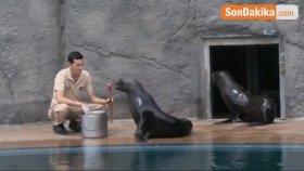 Bursa Zoo'nun Yeni Misafirleri Fok ve Penguen Oldu