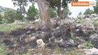 Mersin'de Hayvan Destekleri Hayvancılık İçin Umut Oluyor