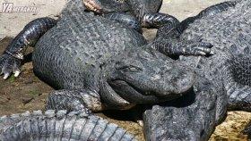 Amazonun Derinliklerinde Yaşayan 10 Korkunç Yaratık