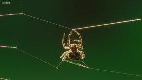 Örümceğin 25 Metre Ağ Fırlatması