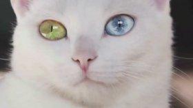 Dünyanın En Pahalı 7 Kedi Türü