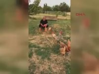 Tavukların Doğum Gününü Kutlamak