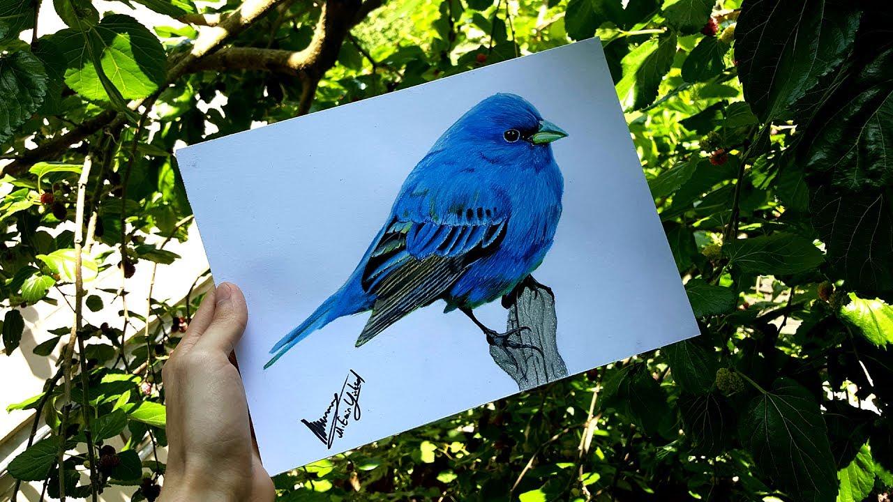 Gercekci Kus Cizimi Realistic Bird Drawing Izlesene Com