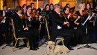 Viyana Oda Orkestrasının Efes'teki Konserine Köpeğin Damga Vurması