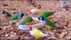kuşları rengarenk ne güzel yaratmış rabi aze we cele kim el-lehü teaeleyden daha güzel boyayabilir