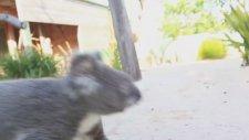 Koala Bakıcısı Olmak