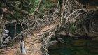 Dünyanın En Tuhaf 10 Ağaç Türü