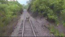 Trenin Altında Kalan Eşek - Hindistan