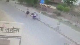Motorcuya Saldıran Öfkeli Boğa