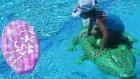 havuzda sörf tahtası ve timsah ile oyunlar , Eğlenceli çocuk videosu