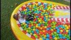 Elif ile Disney car's havuzunu bahçeye taşıtık. topları doldurduk, eğlenceli çocuk videosu