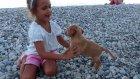 Elif plajda minik köpek yavruları ile oynuyor. Eğlenceli çocuk videosu