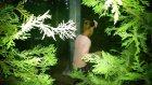 Elif ve Lera parkta saklambaç oynuyor... Eğlenceli çocuk videosu