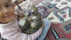 minik kedicik Paticik ile oyunlar, eğlenceli çocuk videosu