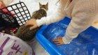 Kedicikler Alina ve paticik evde, evi tanıyoruz ::)) eğlenceli çocuk videosu