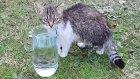 Bu kedicikler enteresan yaratıklar kendi suyu var Alinanın su içtiği yere bakın ::))