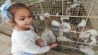 Antalya Hayvanat Bahçesinde Eğlenceli Zamanlar,çocuk Videosu