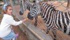 Hayvanat Bahçesinde eğlenceli gezinti , deve tavşan, çocuk videosu