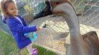 Mini hayvanat bahçesinde gezdik.BalıklarI besledik, ördekler, tavşanlar, tavus kuşları