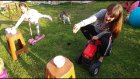 Yumurta Challange 3 araçlarla yumurta taşıma yarışması kaykay bisiklet at jeep, çocuk videosu