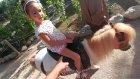 Dinoparkta minik pony banu at biniyoruz, Eğlenceli çocuk videosu