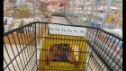 Özel Dondurmalar Challange Alışveriş, eğlenceli çocuk videosu