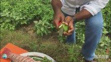 Limonlu Kırmızı Levrek Hint Usulü Pişirme