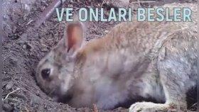 Awcılar Zewk İçin Tawşan Öldürmeyin Ke-Efirleşmeyin Haywe-Enlarında Yaşama Hagı Wardır