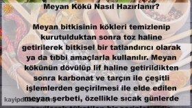 Meyan Kökü Faydaları - İbrahim Saraçoğlu