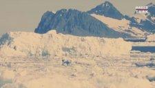 1 Trilyon Tonluk Buzdağının Kıtadan Kopması