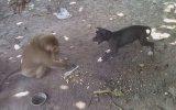 Köpeği Çıldırtan Maymun