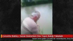 Sazan Beklerken Dev Yayın Balığı Yakalamak