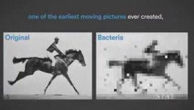Bakteri Dna'sına Film Kaydetmek