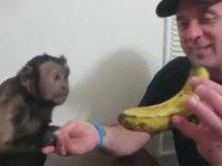 Müptezel Maymun - Tayfun Yılmaz