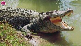 Hayvanlar Alemi İle İlgili 10 Şaşırtıcı Bilgi