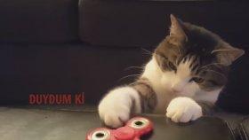 Stres Çarkı İle Oynayan Kediler