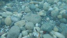Denizde Müthiş Sualtı Görüntüleri,balıklara Yem Verdik Hepsi Biraraya Toplandılar,çocuk Videosu