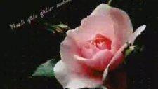 Hasan Dursun - Açan Çiçekler