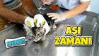 Ponçiğin Aşı Günü Korkudan Kafesten Çıkmadı | Az Kalsın Bir Kedi Daha Alıyorduk