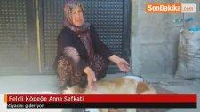 Felçli Köpeğe Anne Şefkati