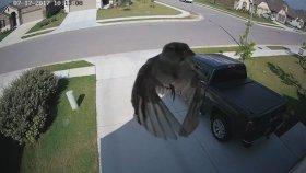 Kameranın Çekim Hızının Kuşun Kanat Hızına Eşit Olması