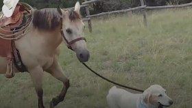 At Binmeyi Öğrenen Köpek