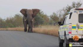 Fil, Yılan,Köpeklere ve Polise Patronun Kim Olduğunu Gösteriyor