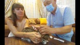 Kedicik Alinanın aşı zamanı, Dede doktor oldu iğne yaptıi elif kedi kostümü giydi