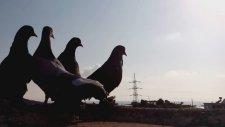 Güvercin Uçurma Part2  cguvercın Yetıstırıcılıgı
