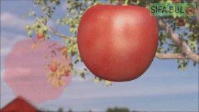 Elma Kürüyle Yağ Yakma ve Kolon Temizliği