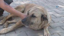 Köpekleri Zehirlemekle Tehdit Eden Adam