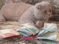 Kediler Neden Dünyayı Yönetmeli?