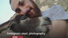 Yürüyemeyen Hayvanlara Özgürlük Hediye Eden Mardinli Genç