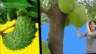 İlk Kez Göreceğiniz 17 Şaşırtıcı Meyve